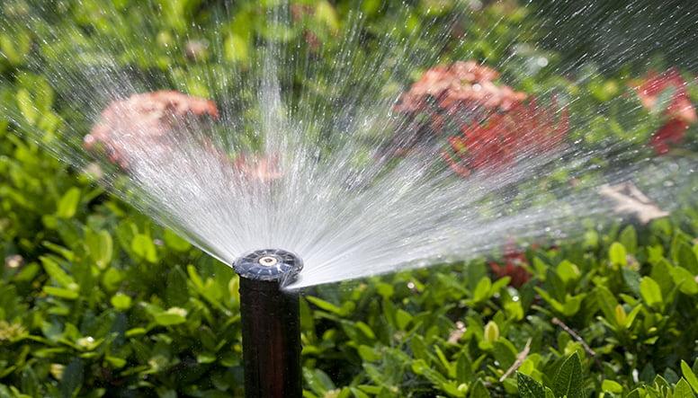 Succesul în agricultură poate fi obţinut prin achiziţionarea sistemelor de irigaţii moderne şi folosirea lor